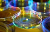 Investigadores de EE.UU. identifican dos nuevas cepas del coronavirus