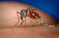 Las autoridades europeas piden extremar las precauciones tras el primer caso autóctono de Chikungunya en España