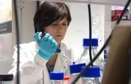 Investigadores españoles logran eliminar en ratones una de las formas más agresivas del cáncer de páncreas