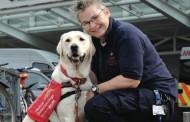 Perros que ayudan a diagnosticar el cáncer de próstata