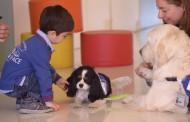 Terapia canina en el nuevo número de la revista Enfermería Facultativa