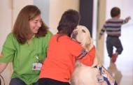 Terapia canina: perros que ayudan a la enfermería