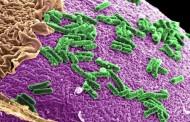 Las bacterias intestinales pueden amplificar de manera sustancial la inmunoterapia del cáncer