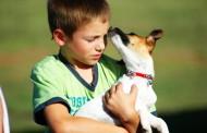 Menos riesgo de asma cuando los niños tienen contacto con los animales en su primer año de vida