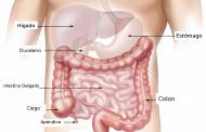 Los microbios intestinales desencadenan la pérdida de grasa en respuesta a las bajas temperaturas