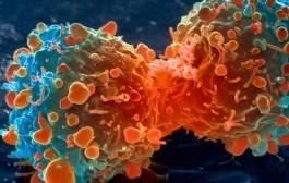 Investigadores del CNIO descubren un mecanismo que permite al cáncer sobrevivir sin glucosa