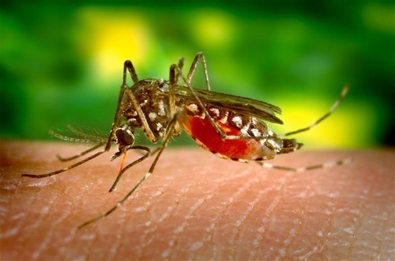 España registró 325 casos de Zika desde 2015 y sólo dos de ellos se infectaron en territorio español