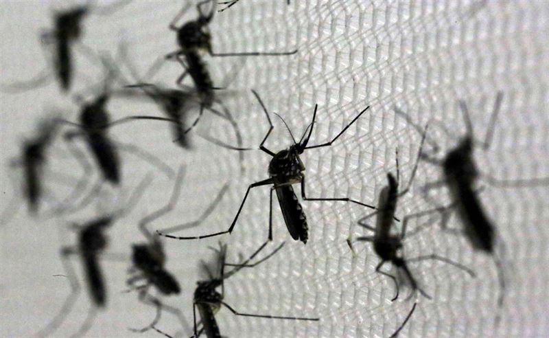 El virus del Zika se puede propagar por vía sexual de hombres asintomáticos a mujeres