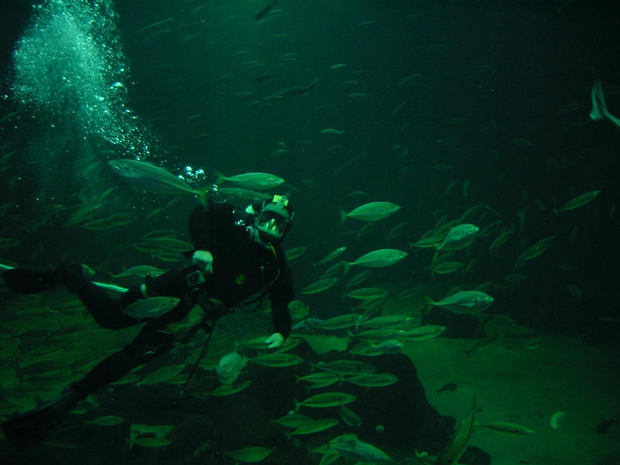 Los buceadores, los trabajadores del mar que sufren más riesgos psicosociales