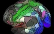 Científicos diseñan un mapa con 180 áreas de la corteza cerebral humana
