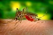La OMS asegura que la malaria se puede erradicar, pero el primer objetivo es controlarla