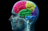 Científicos identifican un posible nuevo tratamiento para la epilepsia