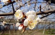 Apps contra el polen para sobrellevar la primavera
