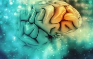 Descubren una posible diana para restaurar la función de las células y mejorar la memoria en el alzhéimer