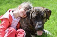 Los perros pueden proteger contra el eczema y el asma de la infancia