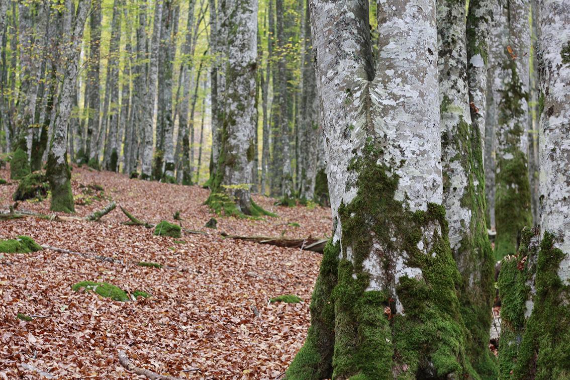 Irati: un paseo por el hogar navarro del <i>basajaun</i>
