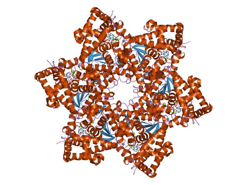 El virus del papiloma es responsable del 10% de los casos de cáncer en la mujer