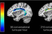 Los niños pequeños que conversan con adultos fortalecen regiones del cerebro del lenguaje
