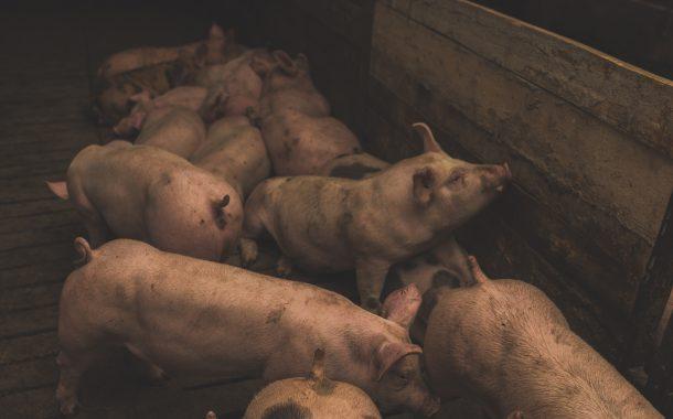 La OMS avisa de que el 60% de todas las enfermedades que afectan a las personas se originan en los animales