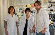 Investigadores españoles identifican un nuevo mecanismo por el que la obesidad provoca resistencia a la insulina