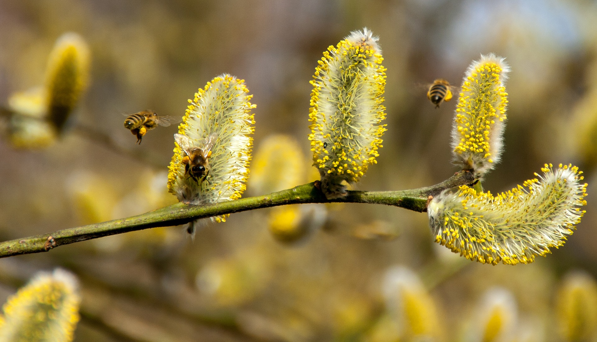 El Colegio de Enfermería de Almería ofrece consejos para prevenir los síntomas de las alergias primaverales