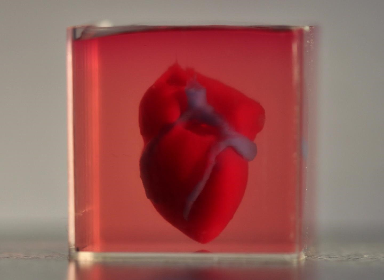 Imprimen en 3D el primer corazón con tejido humano
