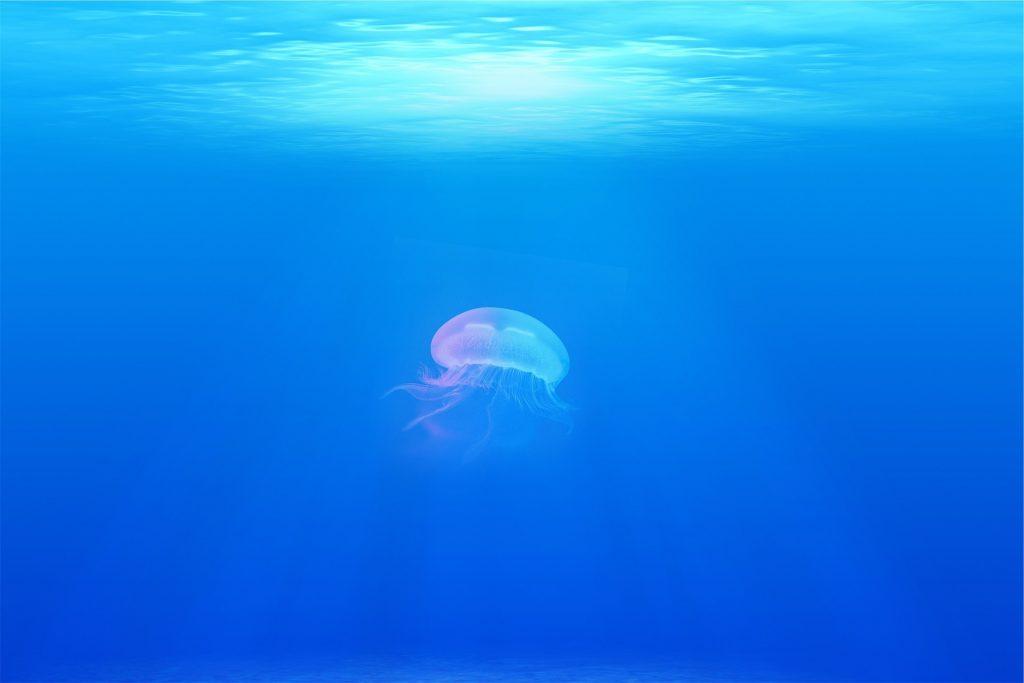 El Colegio de Enfermería de Almería ofrece consejos para tratar las picaduras de medusas