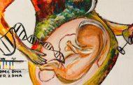 El consumo moderado o excesivo de alcohol durante el embarazo altera los genes en los bebés
