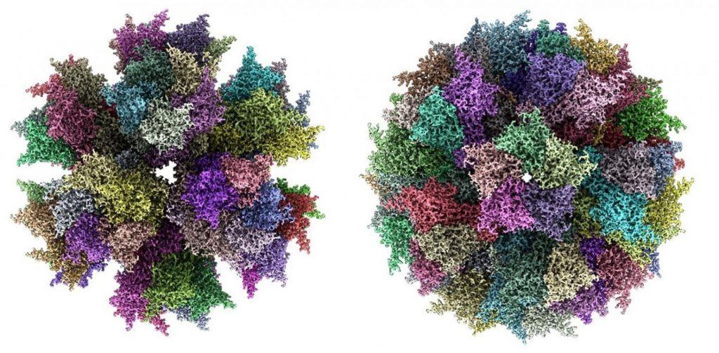 Desarrollan nuevas y potentes vacunas sintéticas para combatir el Chikungunya