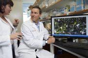 La enfermedad de Parkinson podría comenzar antes de nacer