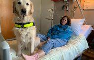 Un estudio apunta que las patas de los perros de asistencia son suficientemente higiénicas para acceder a un hospital