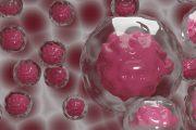 La lesión repetida de las células madre de las vías respiratorias, factor importante en la enfermedad pulmonar crónica